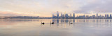 Black Swan on the Swan River at Sunrise, 5th February 2015