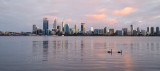 Black Swan on the Swan River at Sunrise, 30th August 2015