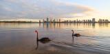 Black Swans on Swan River at Sunrise, 17th June 2016