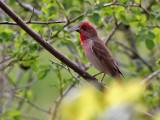 Birds of Latvia