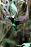 Hummingbirds (Trochilidae) in Colombia 2013