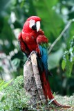 Forty more species of birds in Colombia 2013