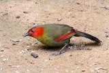 Birds in northern Thailand 2014