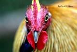 Birds in Sri Lanka 2014