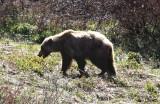 Mammals in Alaska 2014