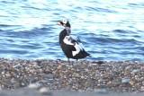 Birds in Alaska 2014