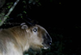 Mysterious and mythic mammals in China 2016