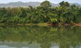 bamboo reflections