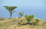# Bali – the tropical savanna #