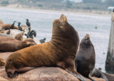 Wildlife around Monterey Bay