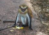 Mona Monkey 1268.jpg