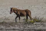 Assateague Horse-9813.jpg