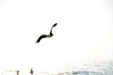 She flies Away