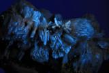 Aragonite   Fluorescent