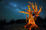 Ancient tree and milky way