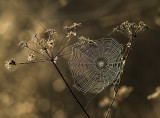 autumn still-life 2