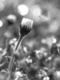 black-and-white spring