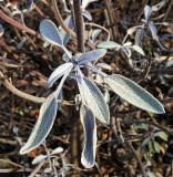 Herbs & Spice Plants