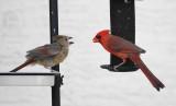 Birds - Smaller