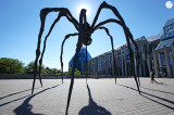 Shadow Spider