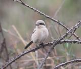 uk_birds