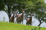 D4_9413F edelhert (red deer).jpg