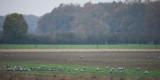 D4_2111F kraanvogel (Grus grus, Common crane).jpg