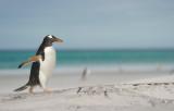 2011 Falklandeilanden/Falklands (Islas Malvinas)