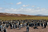 300_0330F koningspinguin (Aptenodytes patagonicus, King Penguin).jpg