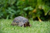 D40_3616F schildpad (Turtle).jpg