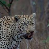 2014 Zuid-Afrika/South Africa