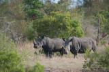 D40_7282F witte neushoorn of breedlipneushoorn (Ceratotherium simum, White rhinoceros).jpg