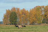 D40_0300F natuurreservaat Czarnocin.jpg