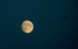 D40_9566F maan.jpg