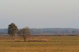 D40_1505F natuurreservaat Czarnocin.jpg