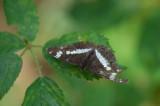 D40_3634F vlinder.jpg