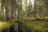 D4S_8666F Finland.jpg