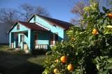 Plus orange and oranges