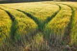 green field!!!