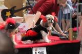 Mardi Paws Dog Parade 2014