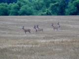 deer_cam_picks