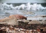 seashore_3.jpg