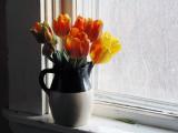 parrot tulips 2.jpg