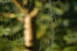 webs06.jpg