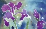maddys iris copy.jpg