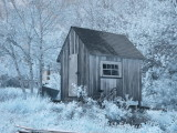 shed in IR.JPG