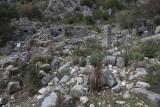 Pinara December 2013 4565.jpg