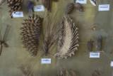 Bursa Forestry Museum May 2014 7507.jpg