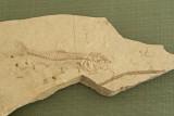 Bursa Forestry Museum May 2014 7512.jpg