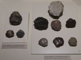 Ankara Anatolian Civilizations Museum september 2014 1321.jpg